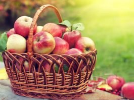 Apples in the Winters