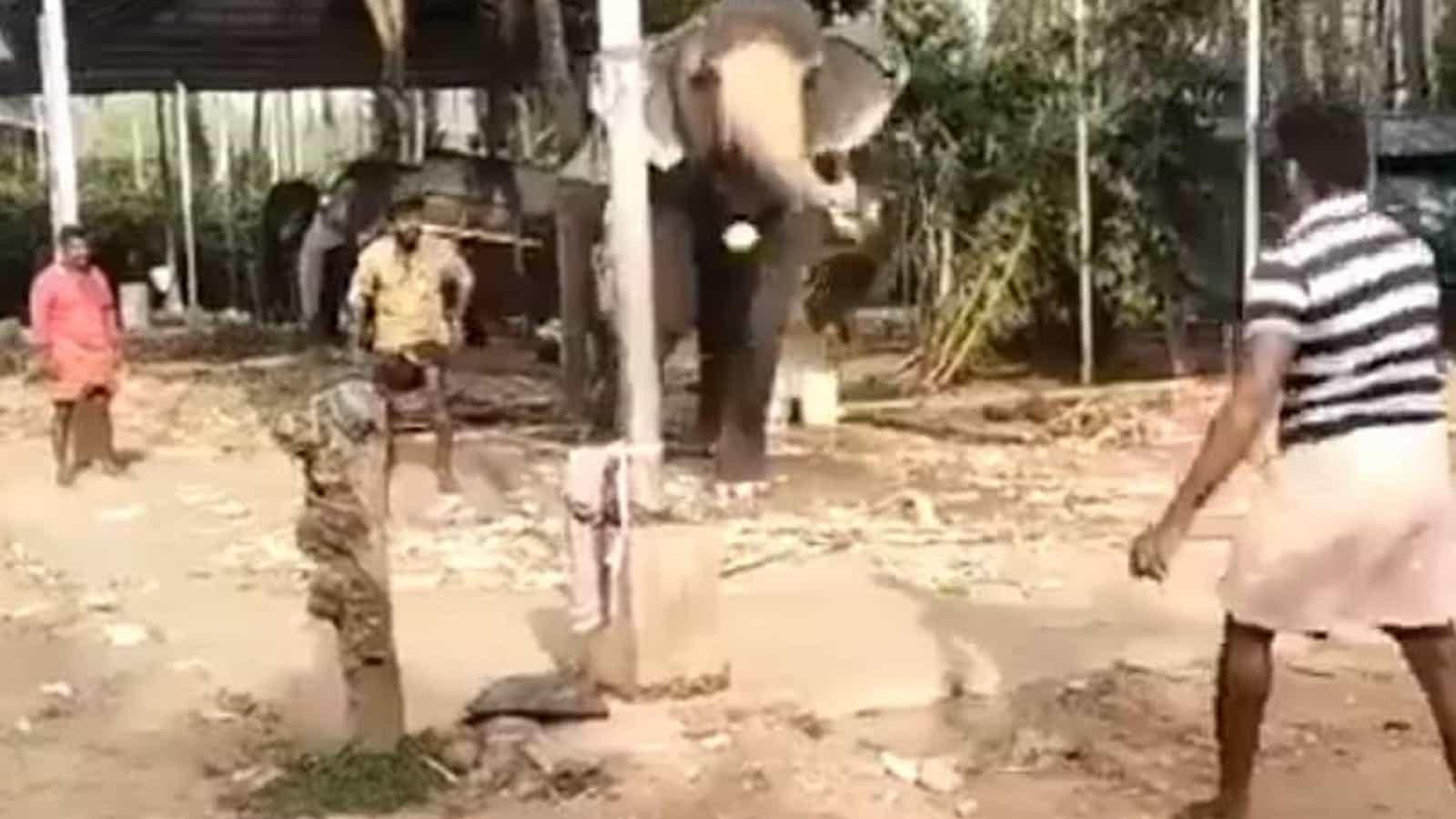 Elephant playing cricket