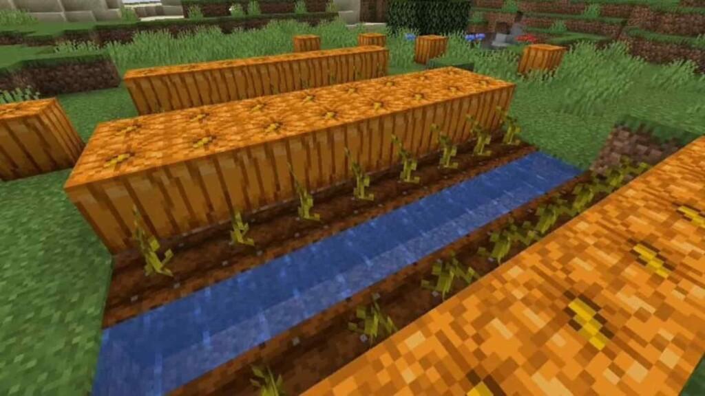 Minecraft Pumpkins