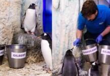 Penguin named after Emma Raducanu 1